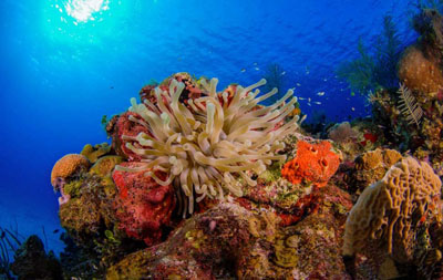 Aware Coral Reef Conservation Specialty